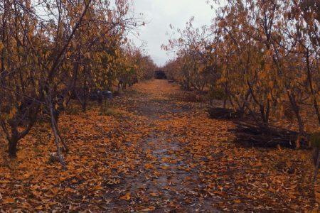 طبیعت پاییزی نوروزان